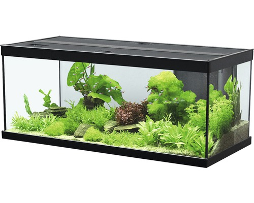 aquarium sans meuble