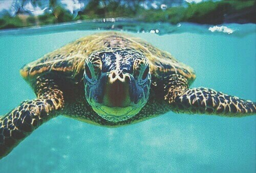tortue swag